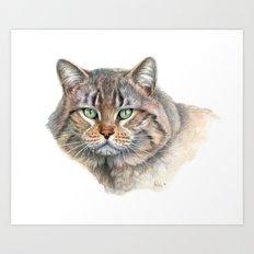 Street Cat portrait CC1402 Art Print