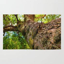 Old Growth Tree Rug