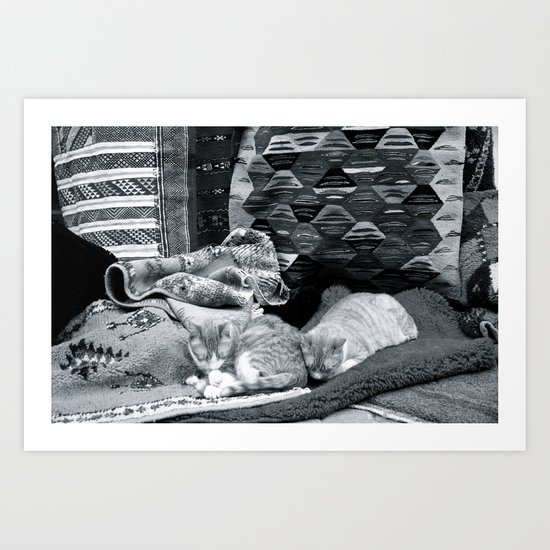 Marrakesh Cats IV Art Print