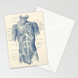 Male Upper Body Muscular System - Vintage Anatomy Stationery Cards