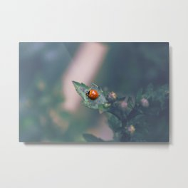 Coccinellidae Metal Print