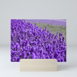 Lavandula Mini Art Print