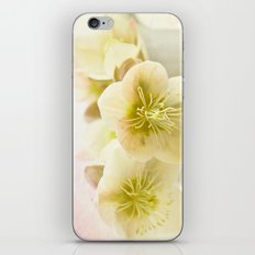 Hellebores in blue jug iPhone & iPod Skin