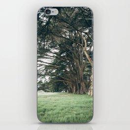 Cypress Tree Tunnel iPhone Skin
