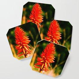 Orange Flower Coaster