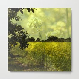 colza field in late summer Metal Print