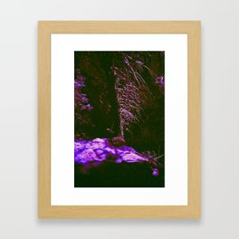 Messages From The Forest Framed Art Print