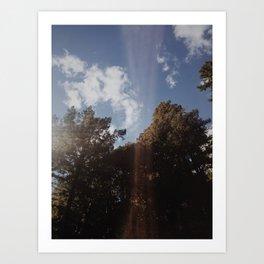 Light on Trees Art Print