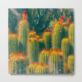 Red Needled Cactus Metal Print