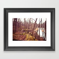 A Walk in the Woods Framed Art Print
