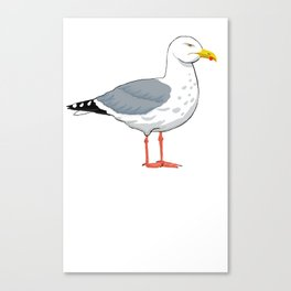 Angry Seagull 2 Canvas Print