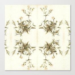 gypsophila repens Canvas Print