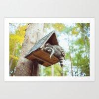 racoon Art Prints featuring racoon by Kalbsroulade