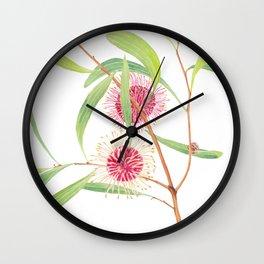Pincushion Hakea (Hakea Laurina) watercolour; Australian flower Wall Clock