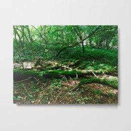 Boughs Photography Metal Print