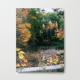 Connecticut Foliage Metal Print