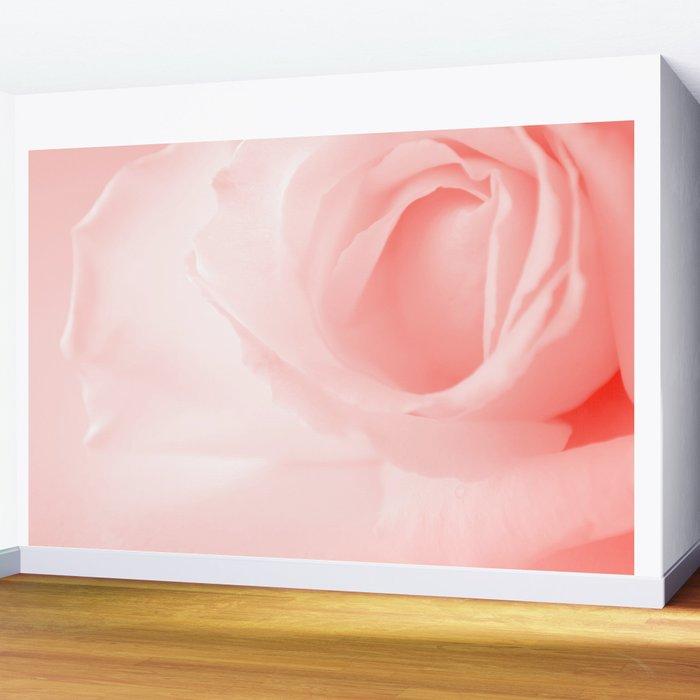 Coral Rose Close-up Wall Mural
