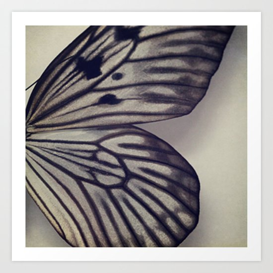 Black and Grey Wing Art Print