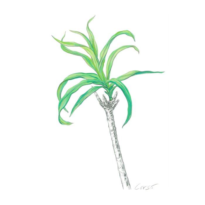 Palm 01 Botanical Flower Duvet Cover