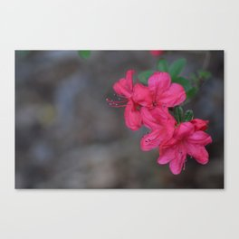 Pink Summer Flowers Canvas Print