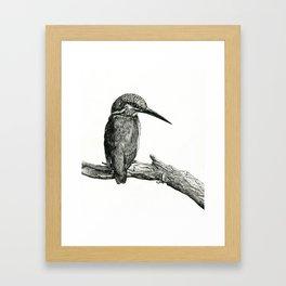 Kingfisher Bird Framed Art Print