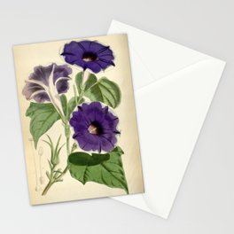 Ipomoea nil 'Limbata' Stationery Cards