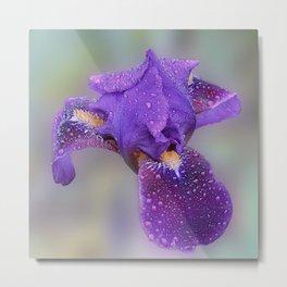 Beauty of Iris Metal Print