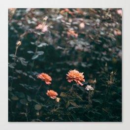 Late Autumn Rose #2 Canvas Print