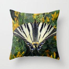 Scarce Swallowtail, Iphiclides Podalirius Throw Pillow