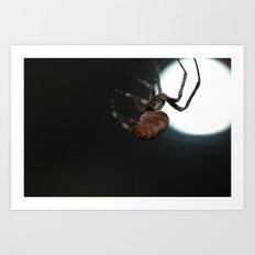 Full Moon Spider Art Print
