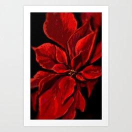 Poinsettia DPPA141225a Art Print
