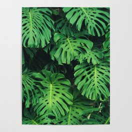 Monstera leaf jungle pattern - Philodendron plant leaves background Poster