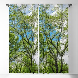 Almost cloudy blue sky over green trees Blackout Curtain