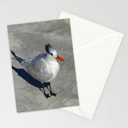 Siesta Key Tern Stationery Cards