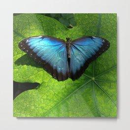 Beautiful Blue Butterfly Metal Print