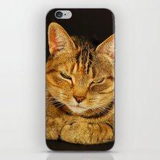 Cat 1 iPhone & iPod Skin