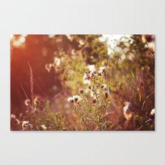 golden dandelions. Canvas Print