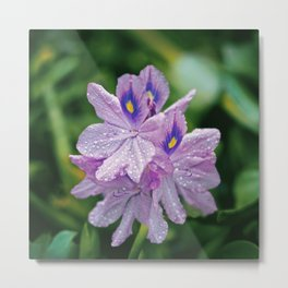 WATER HYACINTH Metal Print