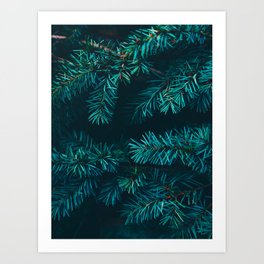 Pine Tree Close Up Neon Green Colorful Leaves Against A Black Background Art Print