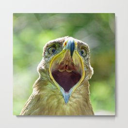Screaming Steppe Eagle Metal Print