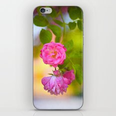 Hanging Rose iPhone & iPod Skin