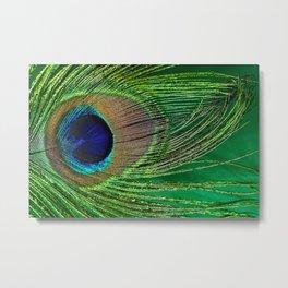 Macro Peacock Feather Large Detail Metal Print