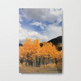 Aspens in Colorado Metal Print