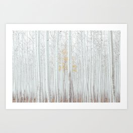 White tree forest Art Print