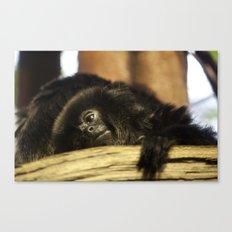 mama monkey Canvas Print