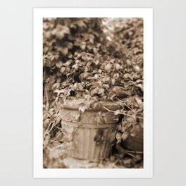 Old Tyme Plant Art Print