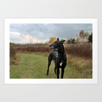 great dane Art Prints featuring Great Dane by Allegranicolephotography