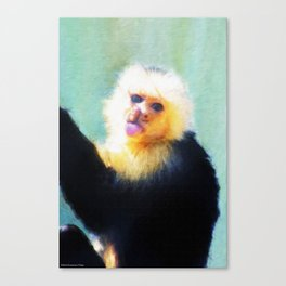 Spunky Little Monkey Canvas Print