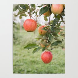 Apples Poster