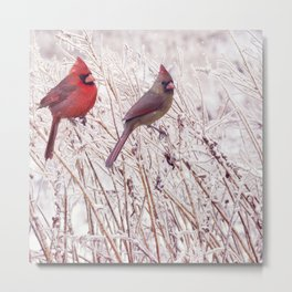 Male and Female Northern Cardinals in the winter Metal Print